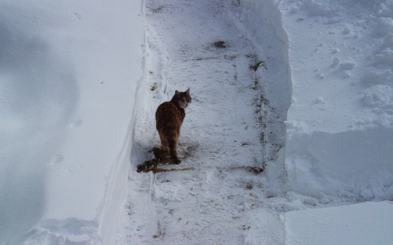 This Cat Doesn't like Winter